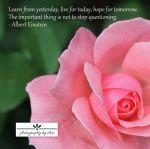 Pink Rose 2 Einstein10×10