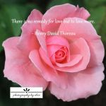 Pink Rose Remedy10×10